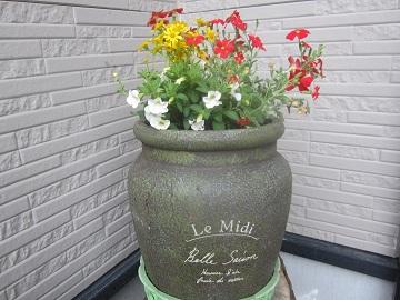 626 我が家の花たち1 ブログ