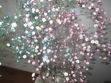 626我が家の花たち ブログ