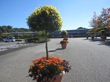 1019 花フェスタ2 ブログ