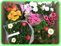 312 お花買いました ブログ