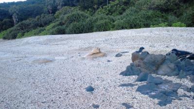 砂浜のカメ1
