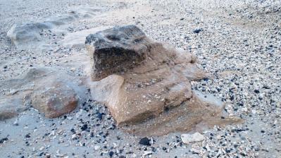砂浜のカメ3