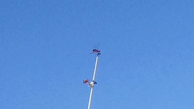 竿の上の赤トンボ3