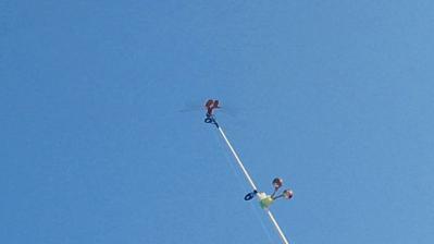 竿の上の赤トンボ6