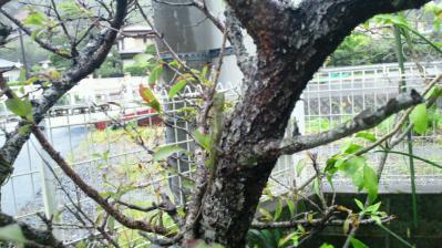 台風16号避難中3