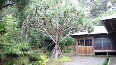 薗家の庭園1