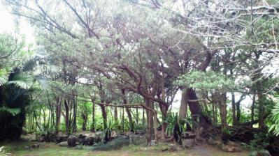 薗家の庭園3