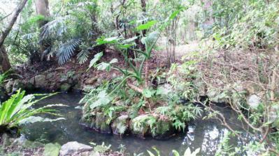 薗家の庭園5