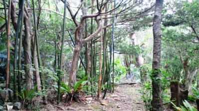 薗家の庭園6