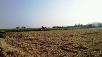 ハーベスタ収穫1