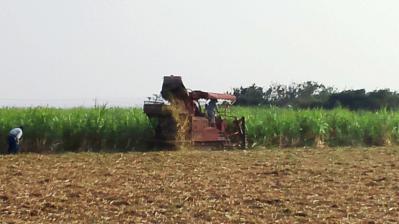 ハーベスタ収穫2