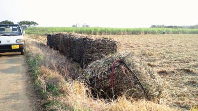 ハーベスタ収穫4