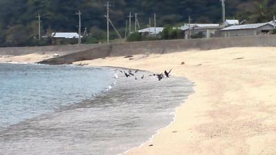 2013.3.6朝=浜辺の異変2