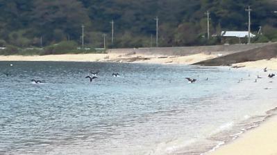 2013.3.6朝=浜辺の異変3