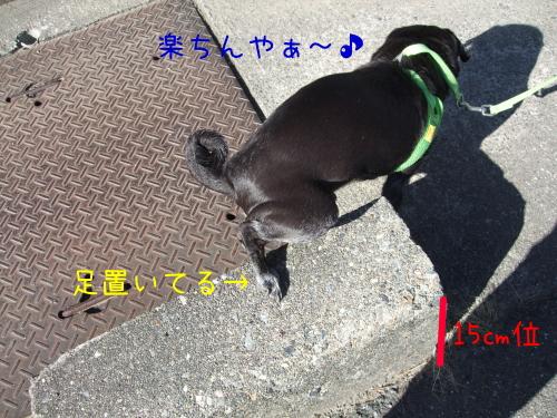 20130308003.jpg
