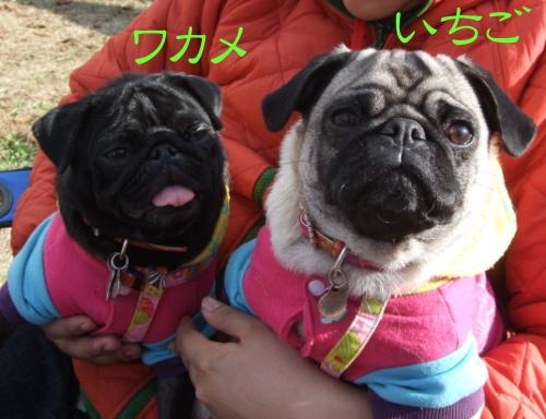asagiri013.jpg