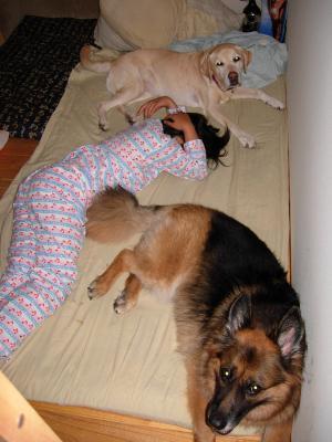 イヌとベッド