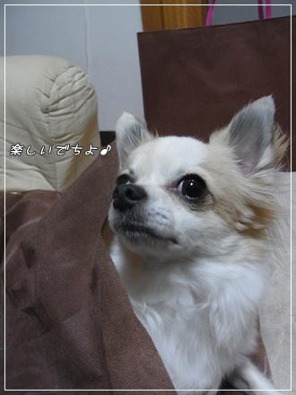 RIMG0095・2