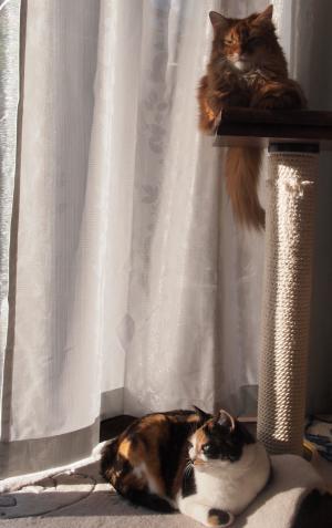 家のお猫様たち。