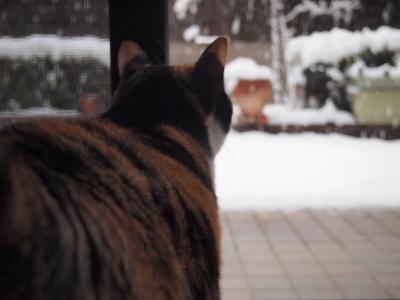 初雪だ~~