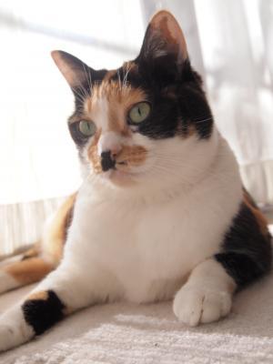 猫っぽいね。