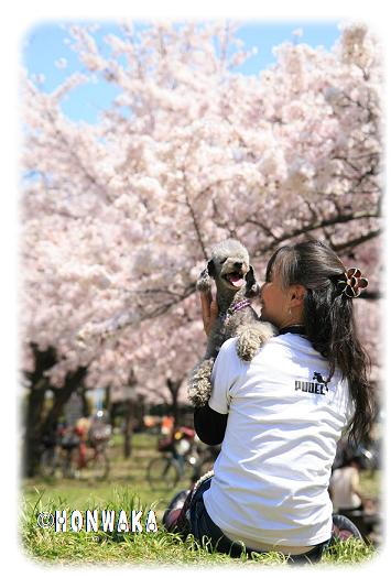 桜とまぁめまま