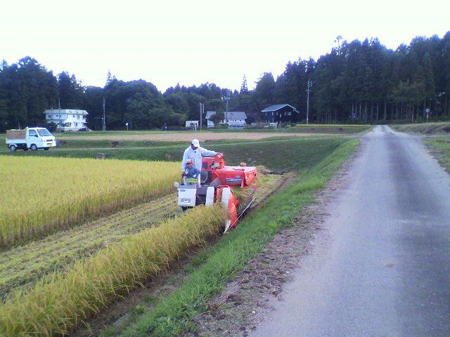 12稲刈りf