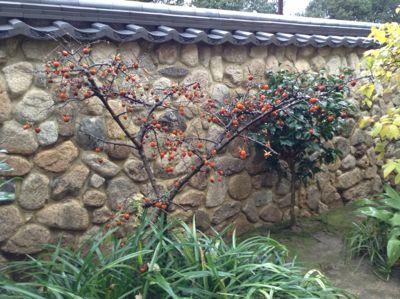 香雪美術館庭
