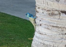 ヤシの木にこんな動物が