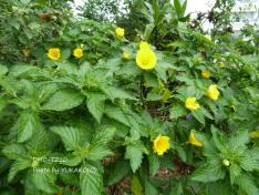 お庭の花その3-2_1_1
