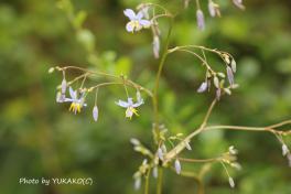 川平ファームのお花その6_1_1
