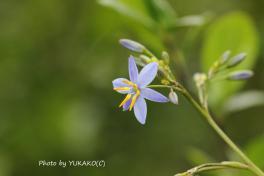 川平ファームのお花その6-2_1_1