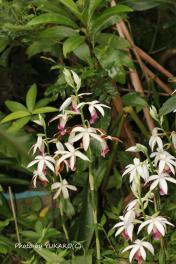 川平ファームの花その1_1_1