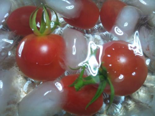 ミニトマト④