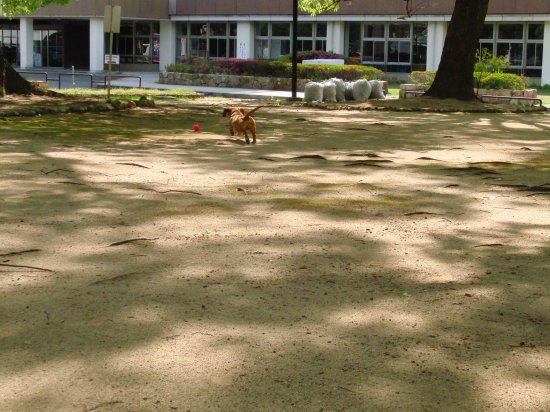 20120513-2.jpg
