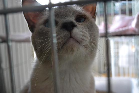 北見猫47匹・個体デジイチ写真撮影・9月23日- 001 (2)