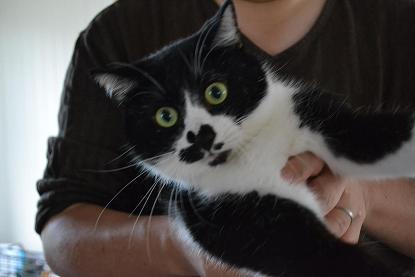 北見猫47匹・個体デジイチ写真撮影・9月23日- 001 (40)