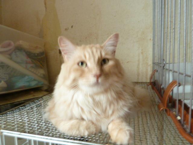 SOS北見47匹の猫さまお写真 148