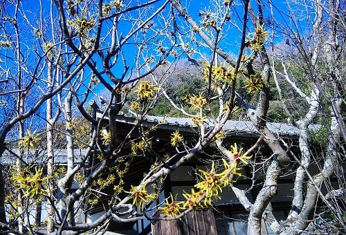 円覚寺万作