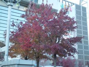20141123 西宮北口の紅葉