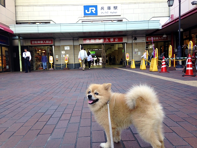 『月夜の夢兎』@高速長田と【ぽぷカルフェス★】