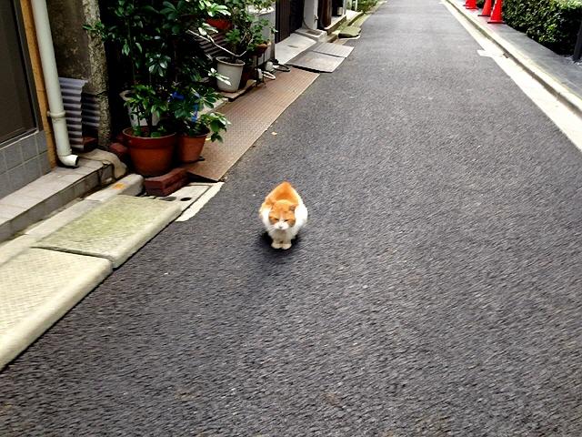 念願の『皇居ラン』!(^^)! 2周走って気持ちよかったですヽ(^o^)丿