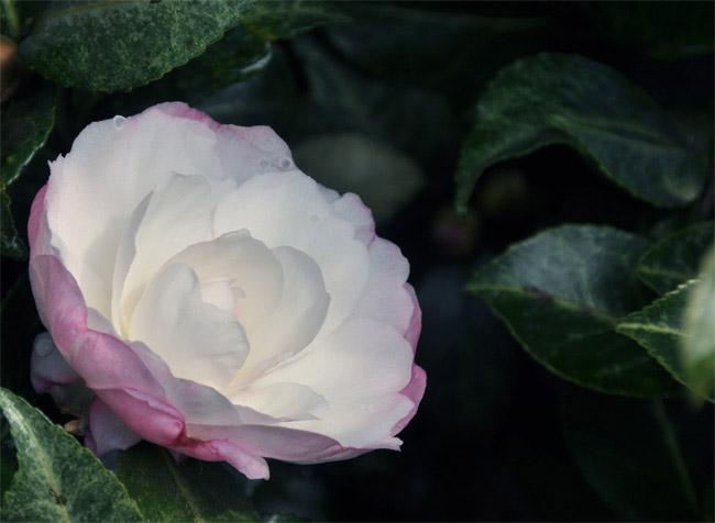 41102-03.jpg
