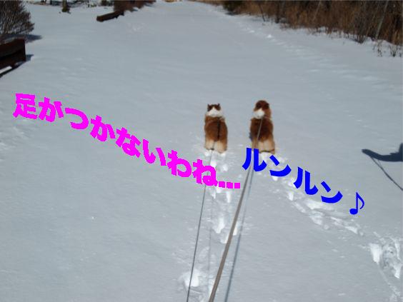 10_20140212103838115.jpg