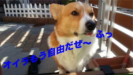 1_20140103110838051.jpg