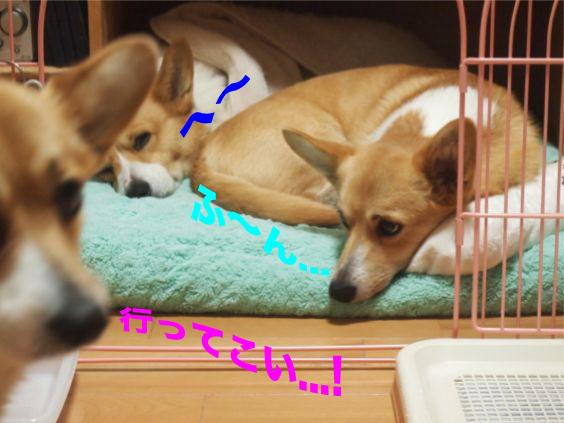 1_201401131026455fa.jpg