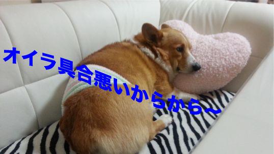 1_20140208130118afa.jpg