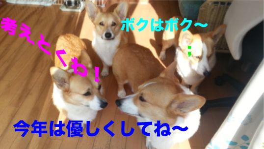 2_20140102113418dfe.jpg
