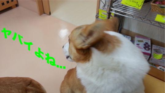 2_201401111345211e3.jpg