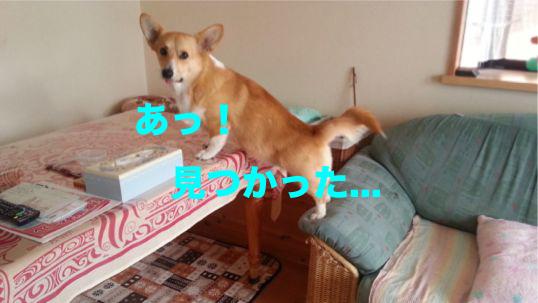 2_2014012118323445d.jpg